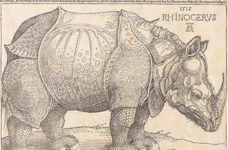 Rhino Dürer